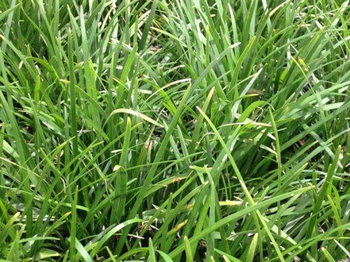 Grass Mondo
